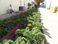 Pacoima Boy & Girls Club | Garden Delights